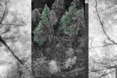 Kivisto-Leaf-Sky-Collage