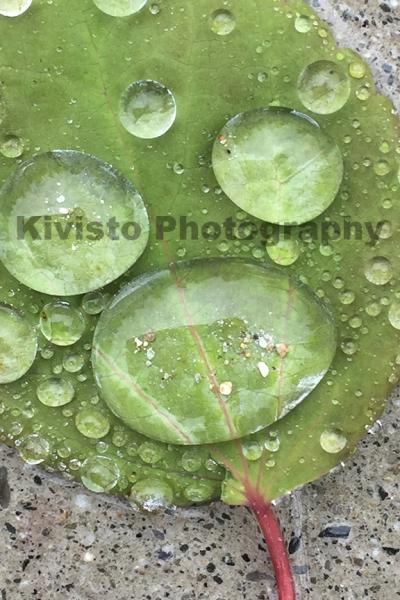 Kivisto-Back to the Dew Drop