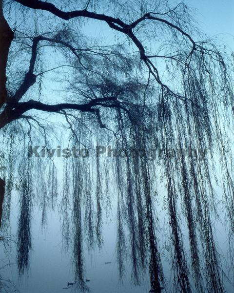 Kivisto-Blue-Willow