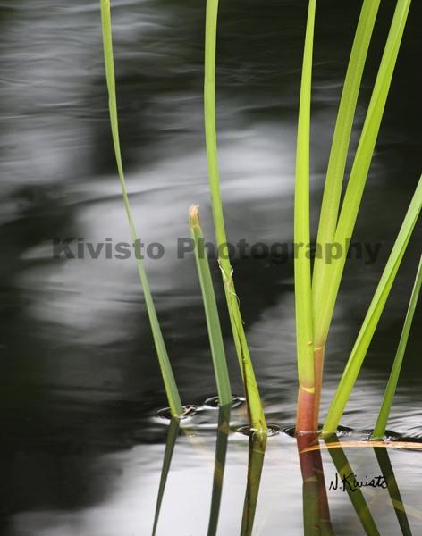 Kivisto-Water-Blades