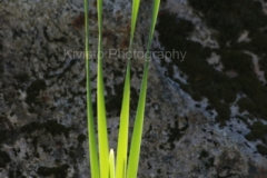 1_Kivisto-Long-Blades