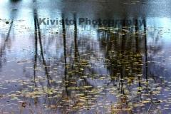 1_Kivisto-Monet-Vibrance