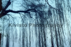 Kivisto-Blue-Willow