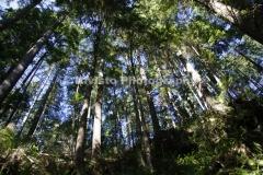 Kivisto-CAP-Trees